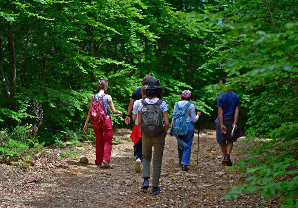 Hiking in the Pelion forest